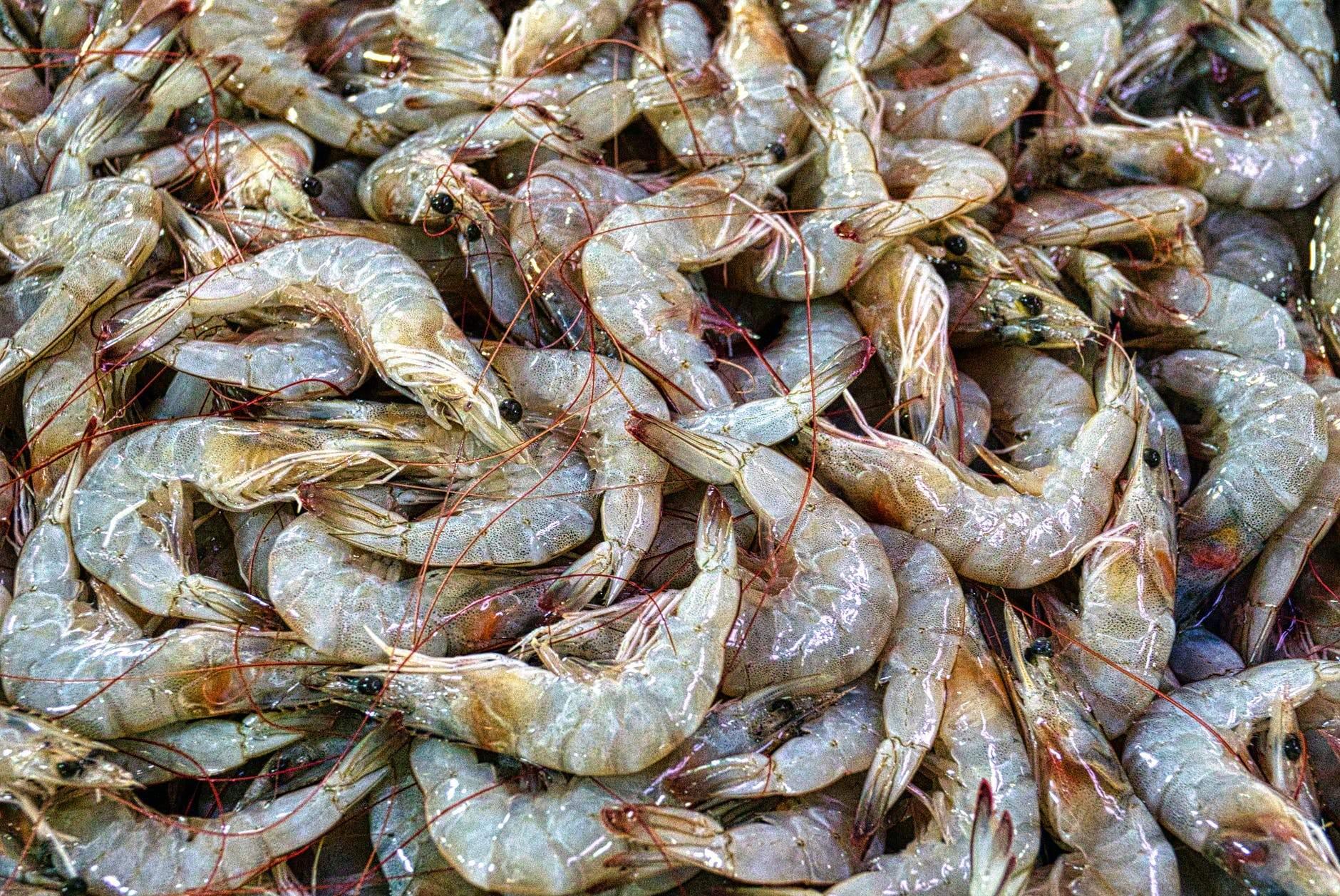 Facts About Shrimps