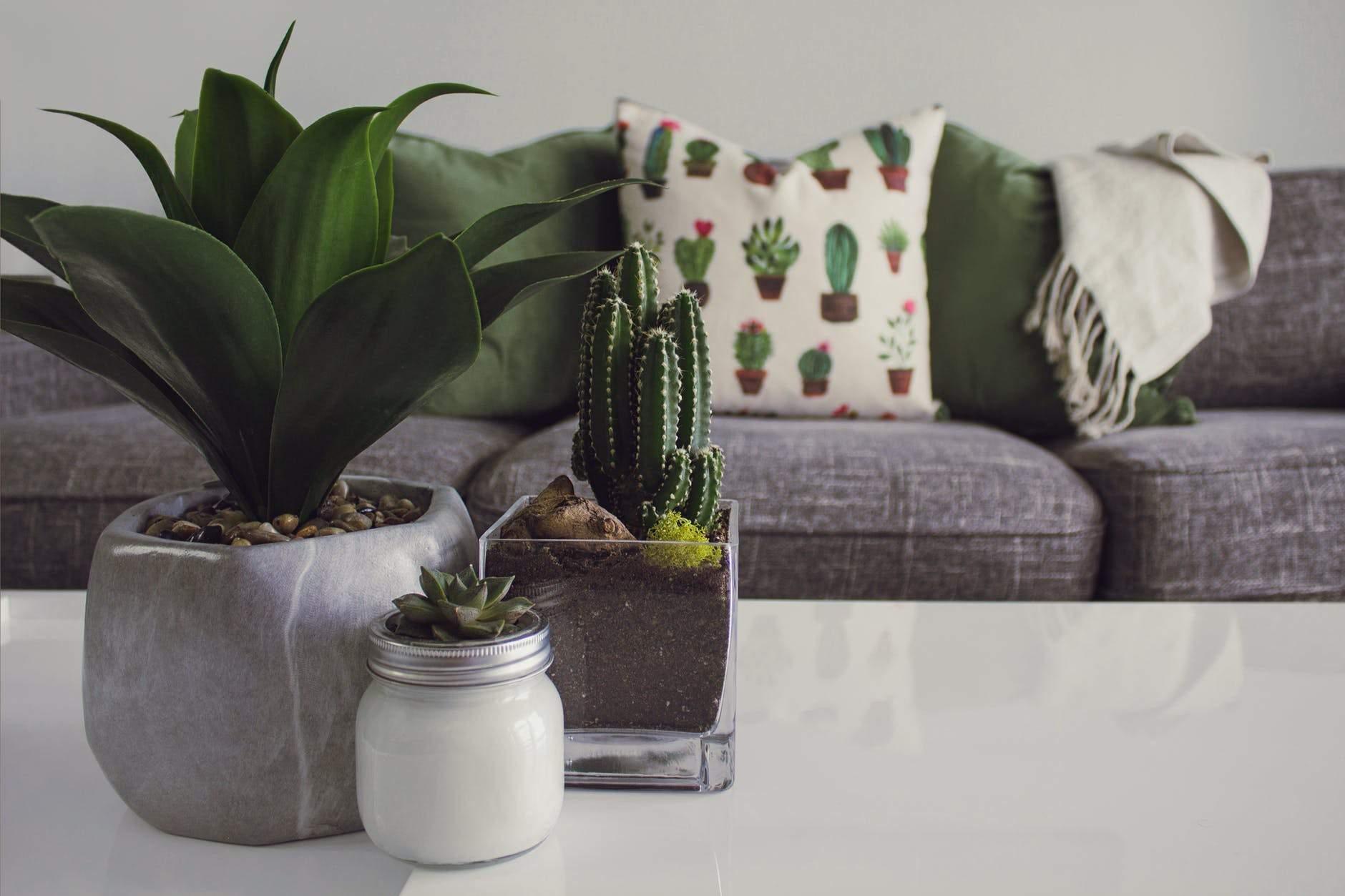 indoor cactus plants